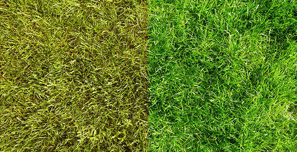 How to Get Green Grass: Lawn Maintenance Tips