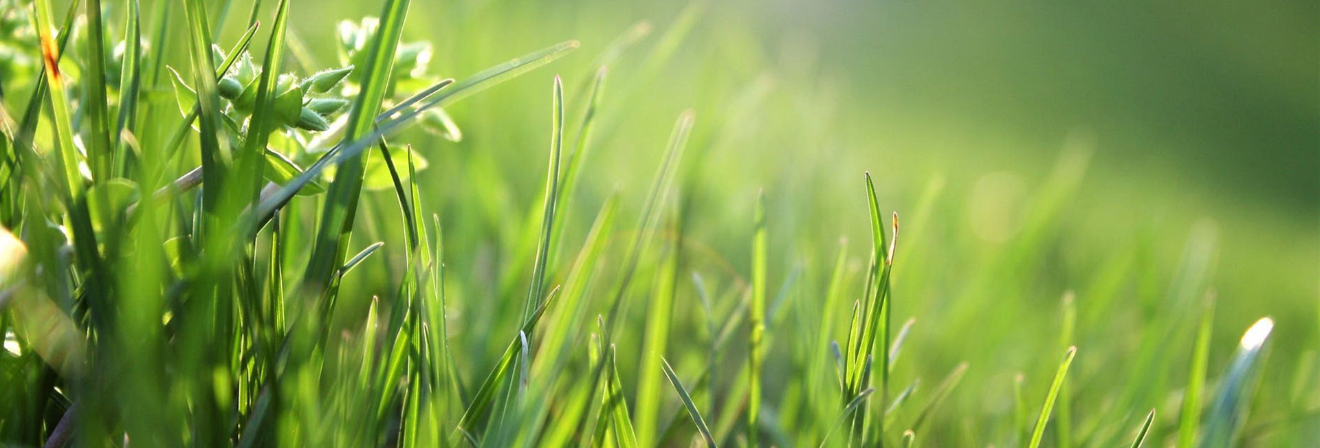 Top 10 Lawn Care Tips for a Healthy Lawn