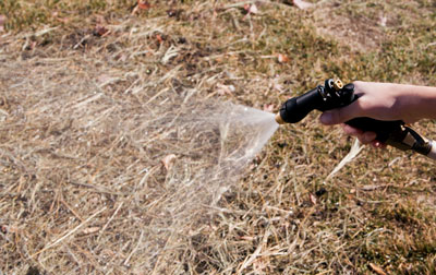 How to Deal With Your Lawn During a Drought | ...